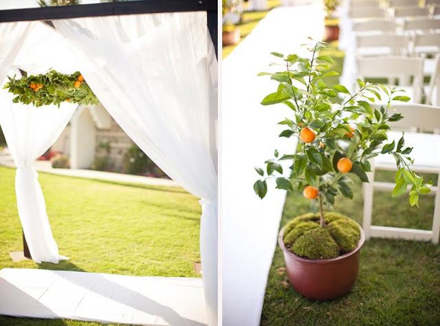 drzewka pomarańczowe jako dekoracja ślubu