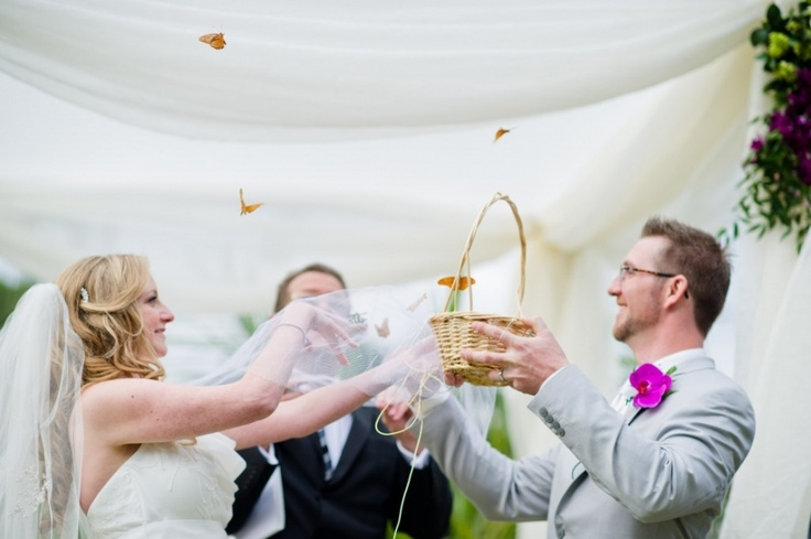 wypuszczanie motylków na ślubie